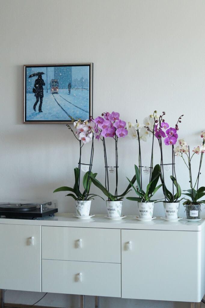 Orchideeën als blikvanger